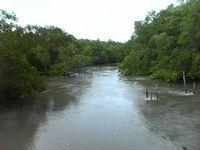 mangrove2